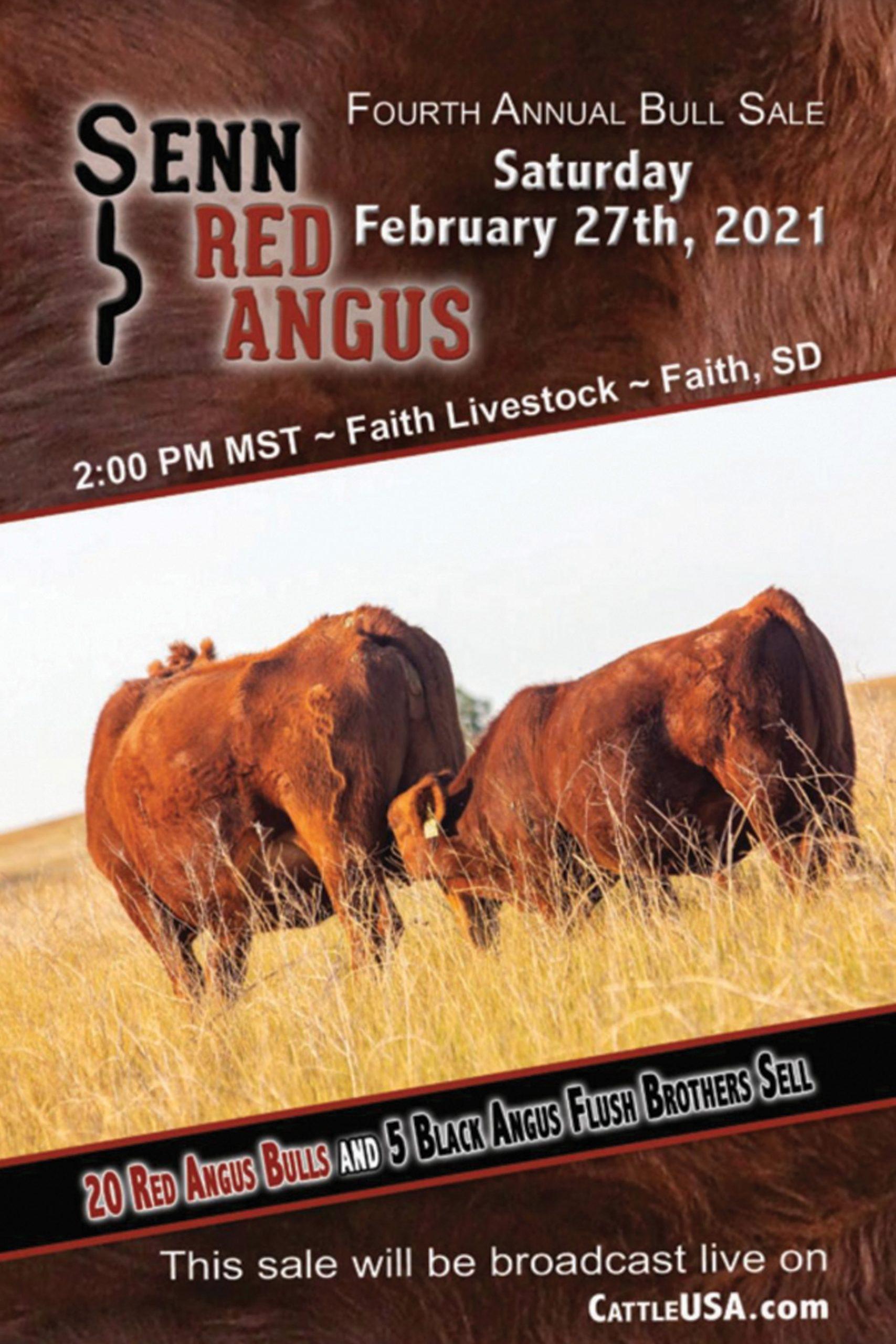 Senn Red Angus Bull Sale 2021